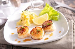 Scallop Size Counts Forecasted Change